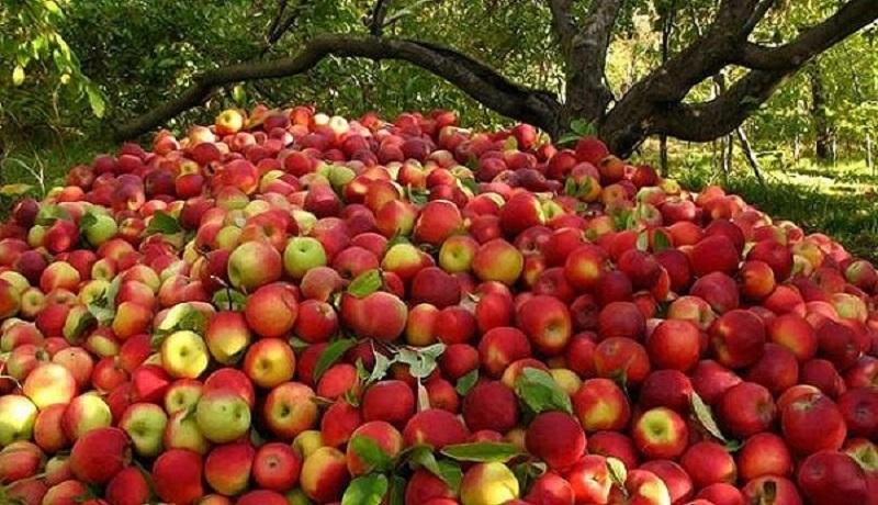 خرید توافقی سیب درختی درجه سه برای حمایت از باغداران