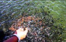 رشد ۴۰ برابری تولید آبزیان در ایران/ وجود ظرفیت تولید ۱ میلیون تن ماهی در دریا