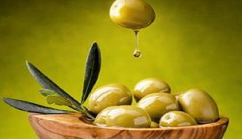 تولید میوه زیتون به ۱۲۰ هزار تن رسید/ واردات روغنهای بی کیفیت زیتون در بازار