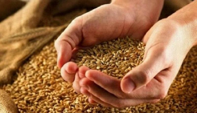 سال گذشته 13.4 میلیون تن گندم تولید و 9.5 میلیون تن خرید تضمینی انجام شد