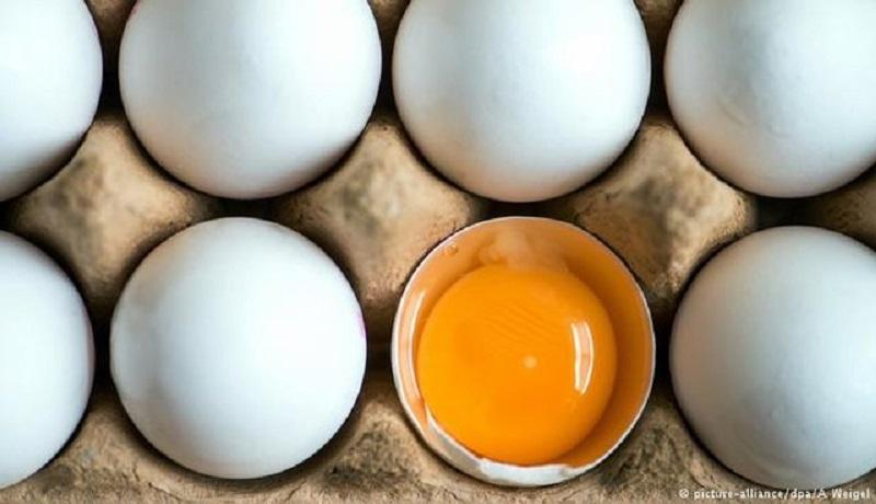 اصلاح نرخ بنزین تاثیری بر قیمت تخممرغ ندارد