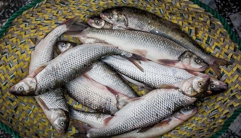 افزایش ۱۵ درصدی تولید محصولات شیلاتی/بومی سازی تجهیزات پرورش ماهی در دریا
