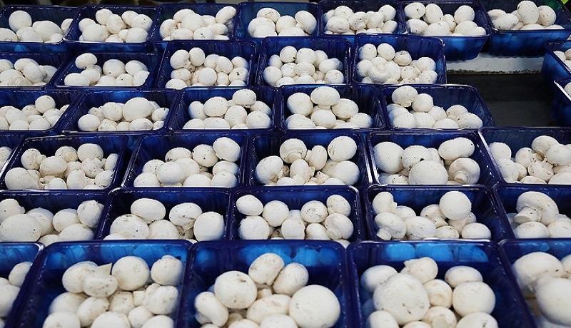 روند بهبود قیمت قارچ در بازار/ تولید روزانه قارچ به ۴۵۰ تن رسید