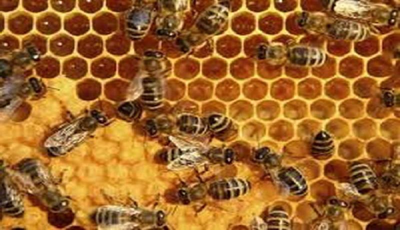 عسل ۲۵ هزار تومان طبیعی و باکیفیت نیست