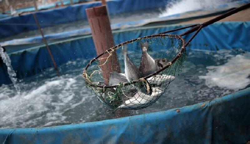 آب خوش از گلوی تولیدکنندگان ماهی خرمشهر پایین نمیرود
