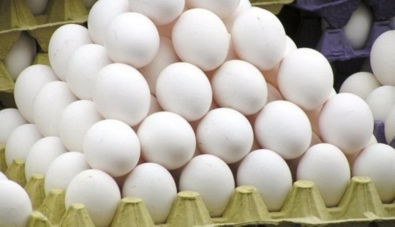 صادرات تخم مرغ متوقف شد/قیمت هر کیلو تخم مرغ ۷ هزار و ۸۰۰ تومان