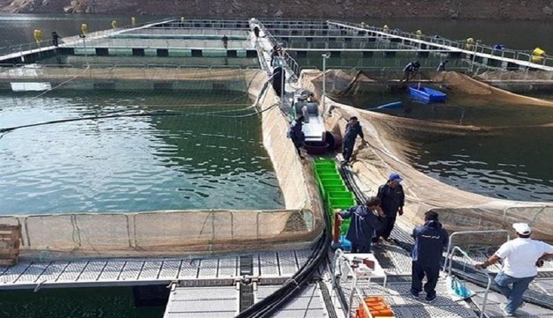 حمایت از فائو توسعه پرورش ماهی در قفس
