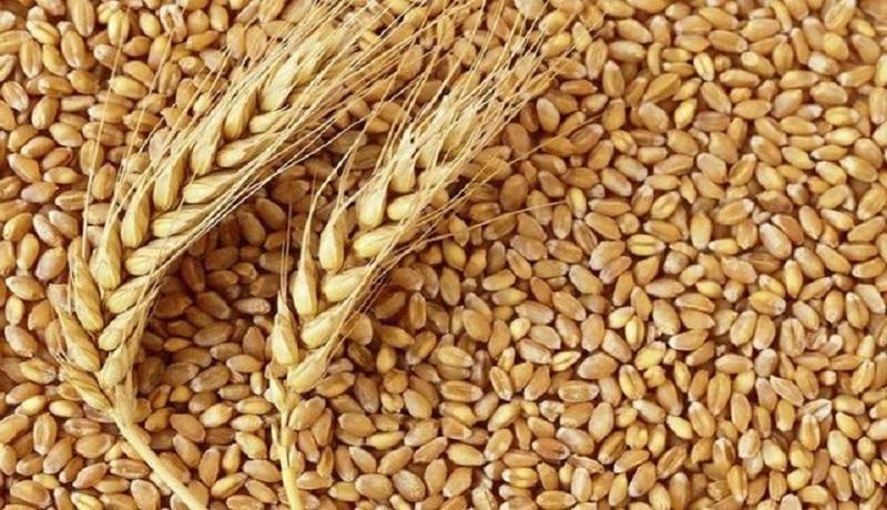 ایران یک میلیون تن گندم خارجی خرید