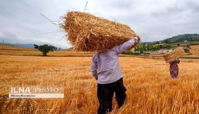 تلاش مجلسیها برای گنجاندن اعتبار افزایش قیمت گندم در بودجه سنواتی ۹۹/ گندمکاران مجبور به استفاده از بذر خود مصرفی شدند