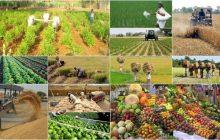 ۱۳۳ میلیون تن محصولات کشاورزی و دامی سال گذشته در کشور تولید شد