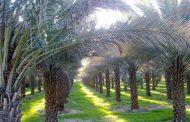 ۲۹۱ میلیارد تومان رهاورد سفر رئیس جمهوری برای تحول نخیلات بوشهر