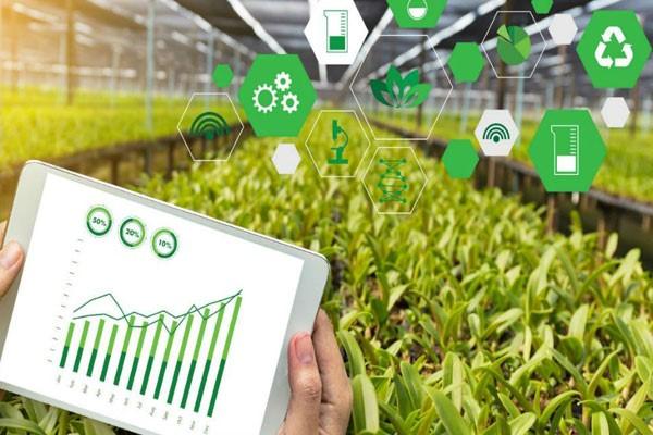۲۰ طرح هوشمندسازی ابزار تولید گیاهان دارویی اجرایی شد