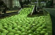 توسعه اقتصادی با رفع چالش فرآوری تولیدات کشاورزی در گلستان