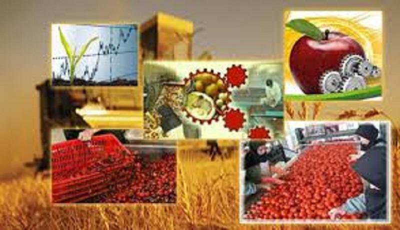 کشاورزان محکوم به خام فروشی هستند/ ارزآوری محصولات کشاورزی هلند ۷۰ برابر ایران است