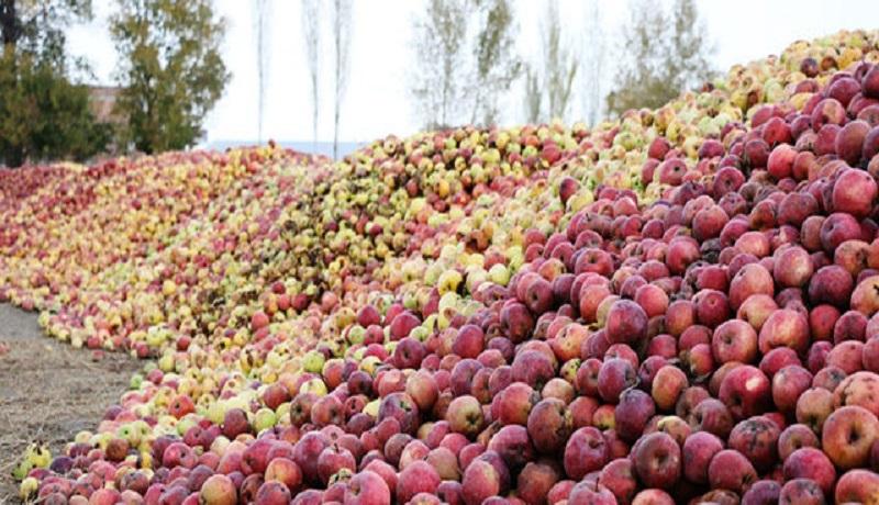 قیمت سیب صنعتی ۸۰۰ تومان تعیین شد