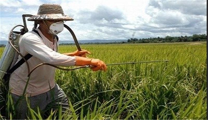 کشاورزان نگران تأمین سموم مورد نیاز نباشند / سموم پرخطر حذف شد