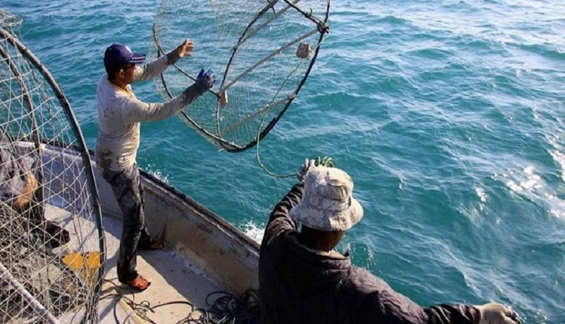 قیمت خوراک ماهی 60 درصد افزایش یافت