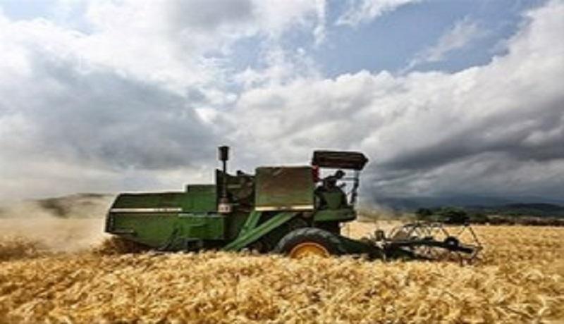 پیش بینی کشت ۶ میلیون هکتار سطح زیر کشت گندم در حال تحقق است