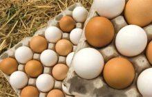 توزیع ۱۰۰۰ تن تخممرغ وارداتی/نرخ مصوب هرشانه تخم مرغ ۴۳ هزار تومان