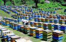 زنبورداران ملزم به رعایت فاصله از زنبورستانهای مجاور هستند