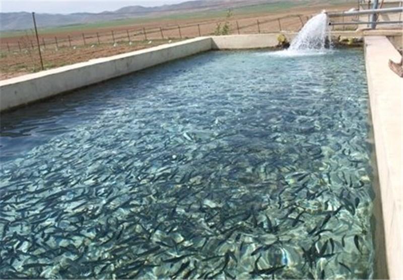 خشکسالی تولید ماهی را ۲۰ هزار تن کاهش داد/ کرونا امکان صادرات قزلآلا به چین را گرفت/ تولیدکنندگان ماهی را زودتر روانه بازار میکنند